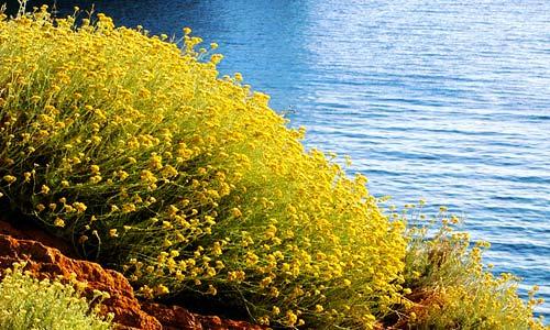 Csendélet a szigeteken – FOTO: WWW.ISOLADICAPRAIA.IT